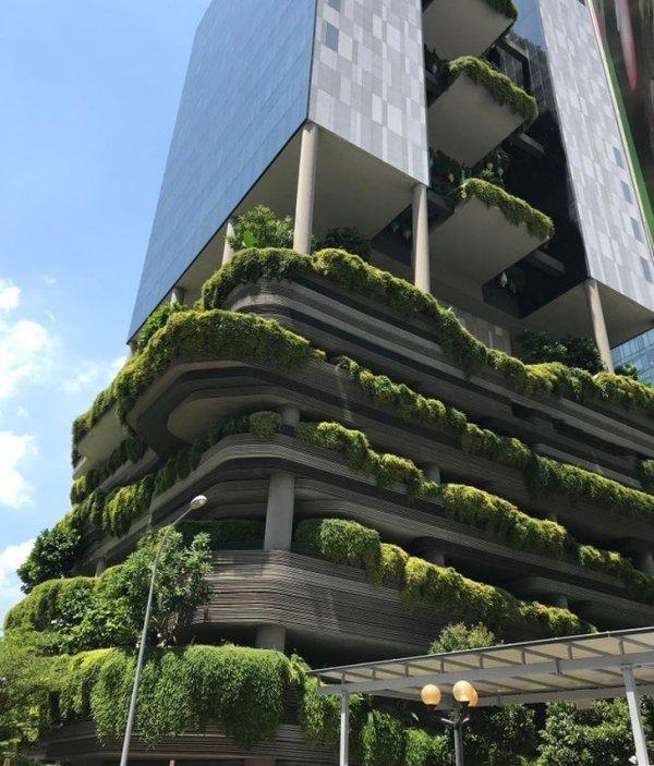 """""""Зеленый"""" отель в Сингапуре"""