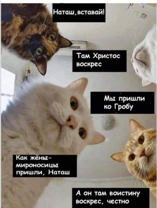 Печенеги, половцы, слабый рубль - что волнует котов и Наташу в 2020 году