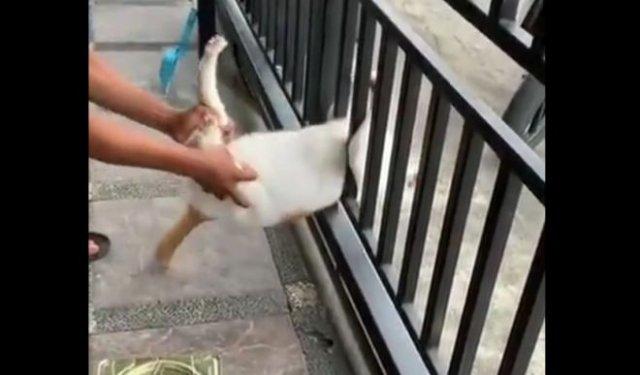 Говорят, что коты - это жидкость. Не в этом случае