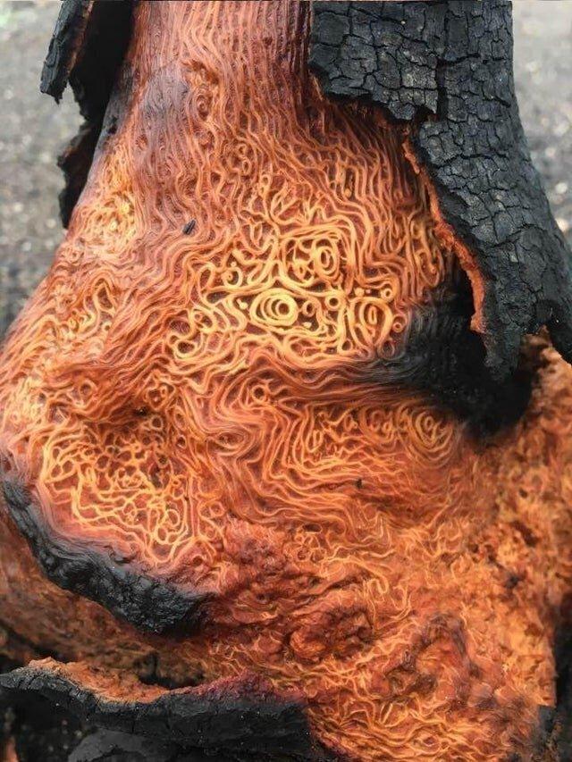 Внутри сгоревшего дерева