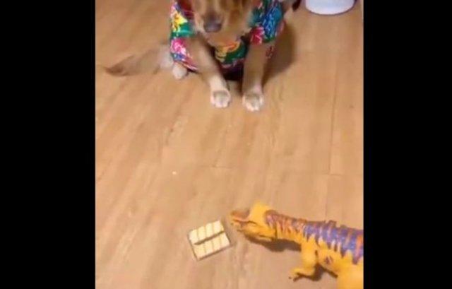 Пес, который отлично понимает намеки