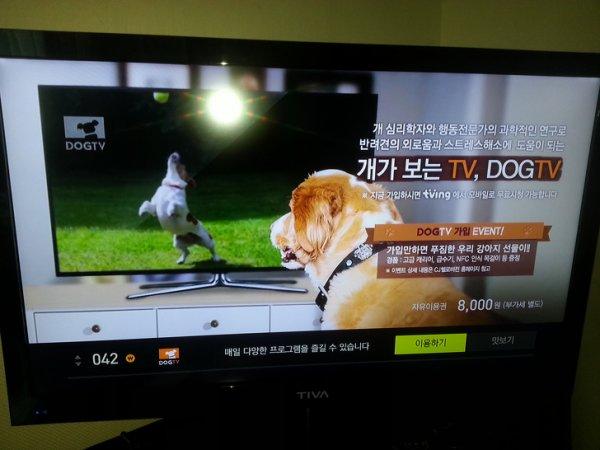 Телеканалы каналы для собак