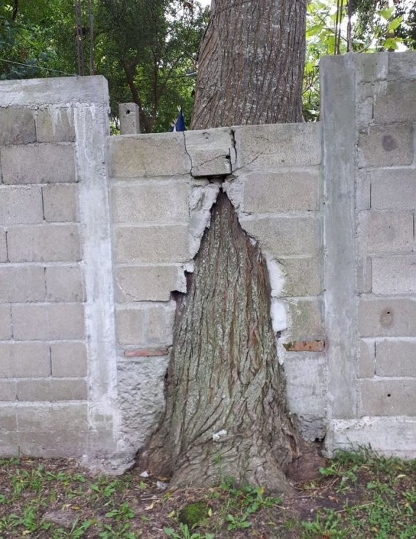 Сказали поставить забор, про деревья нас не предупреждали