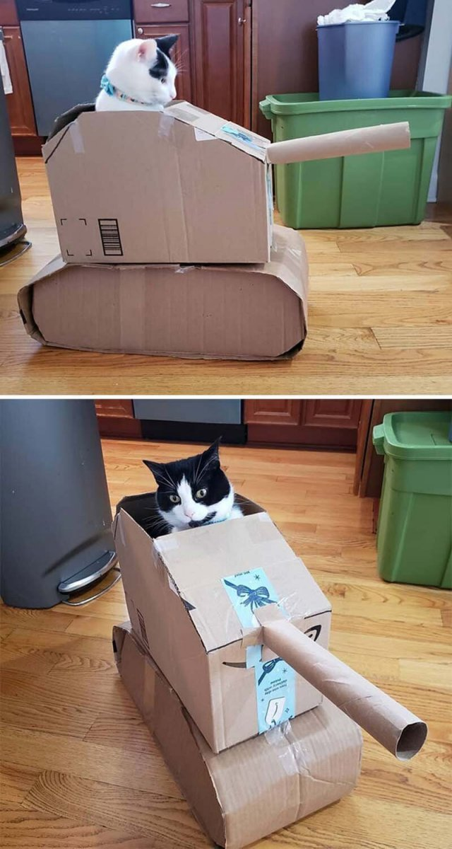 """Люди заскучали на карантине и начали делать """"бронетехнику"""" для котов из картона"""