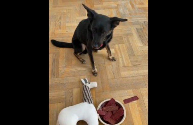 Как отучить собаку от какого-то продукта?
