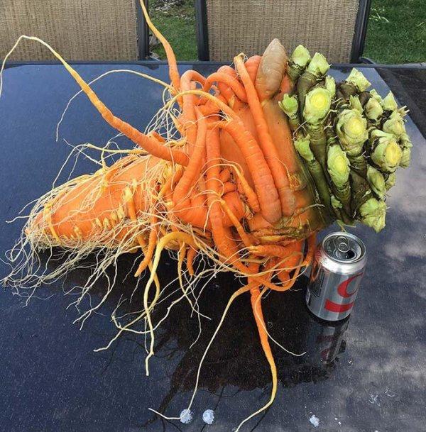 Эта морковка похожа на босса из какой-нибудь видеоигры