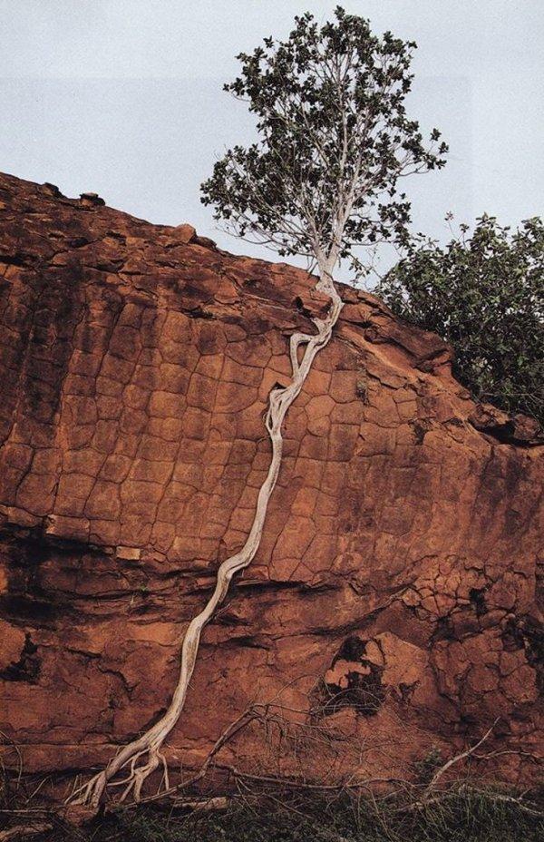 """Девиз этого дерева: """"Никогда не сдавайся"""""""