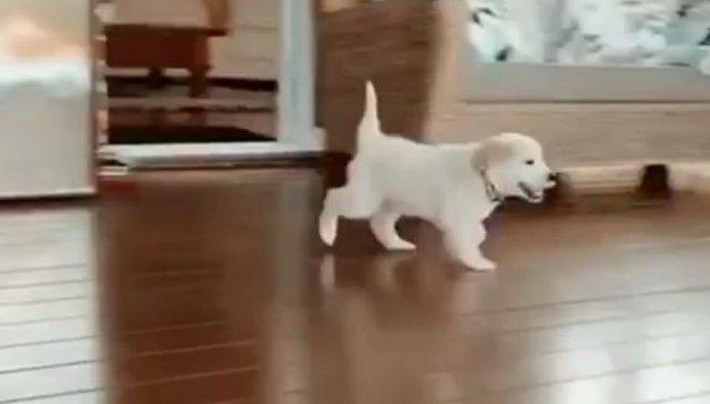 Пес, который боится своих же действий