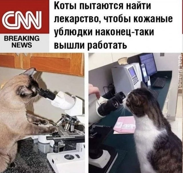 Подборка мемов о коронавирусе