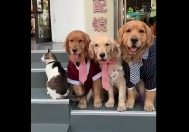 """Пес заставляет кота сделать нормальное """"семейное"""" фото"""