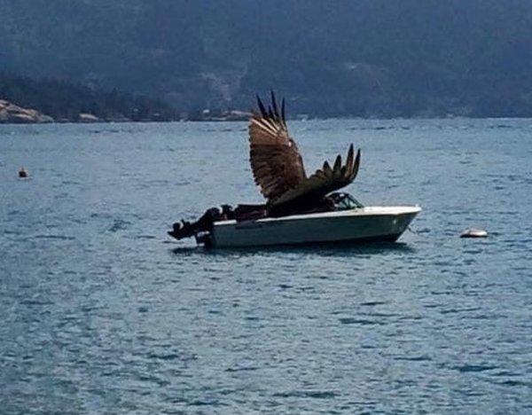 Все нормально, просто орел катается на катере