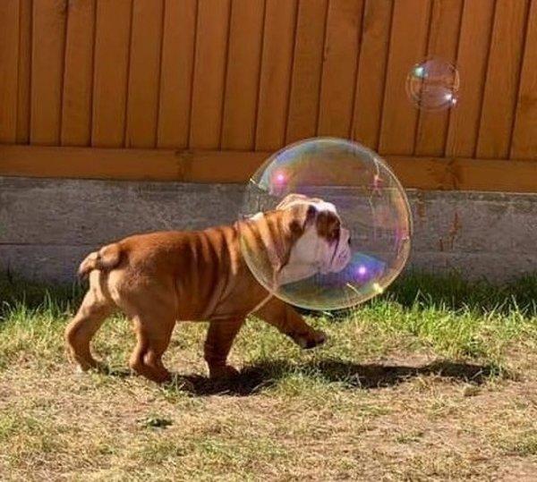 Собака-астронавт к полету готова