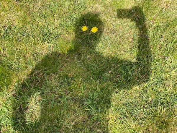 Одуванчиковая тень