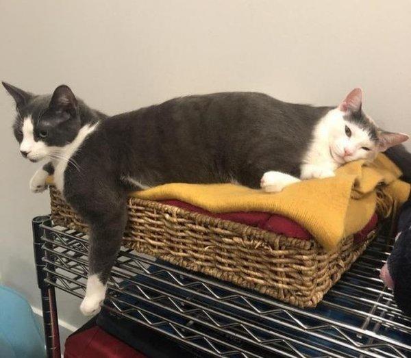 Кот + кот = котокот