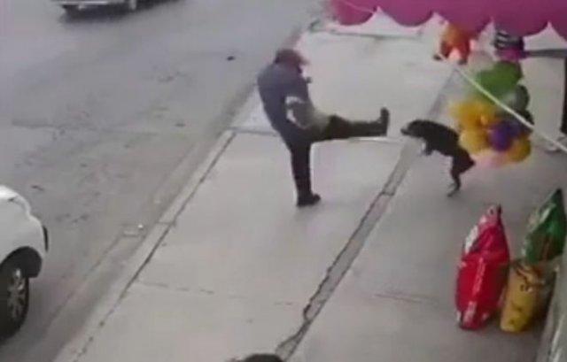 Хотел проучить собаку, а проучил себя