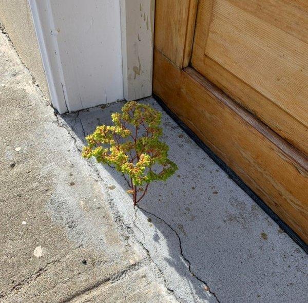 """Растение в бетоне"""""""