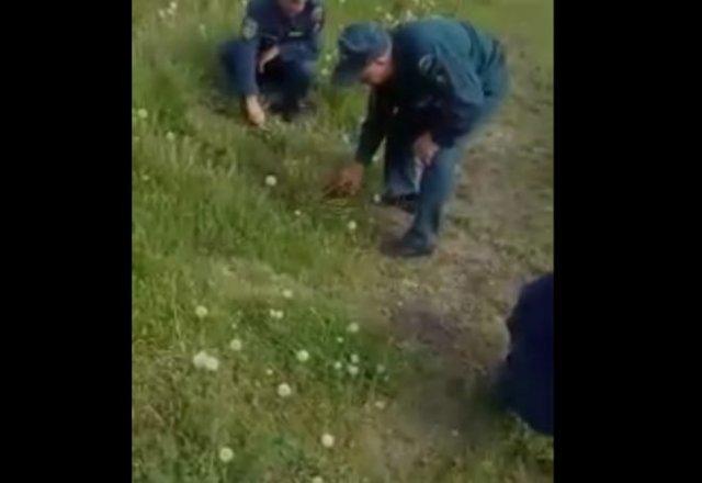В Новосибирске пожарных заставили стричь траву ножницами