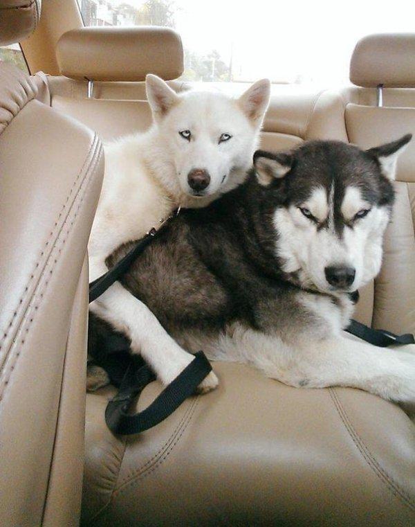 Собаки бывают двух типов...