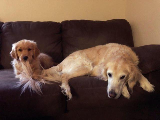 Младшие братья и сёстры одинаковы и у собак, и у людей