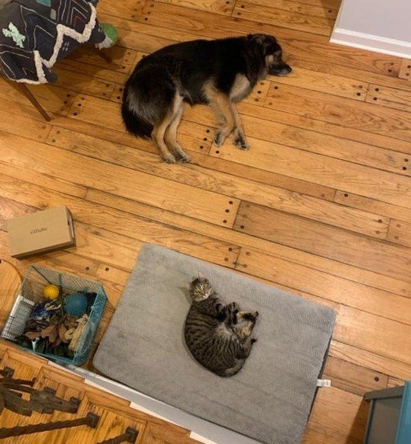 Купили собаке кровать