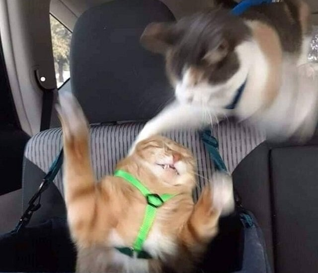 Когда брату разрешили сидеть на переднем сидении, а тебе нет