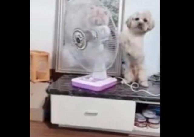 Очень умный пес