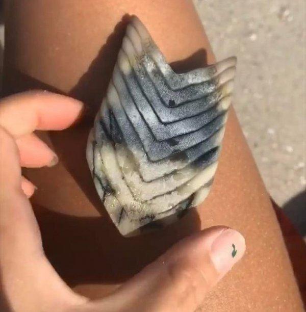 часть челюсти морского ската.