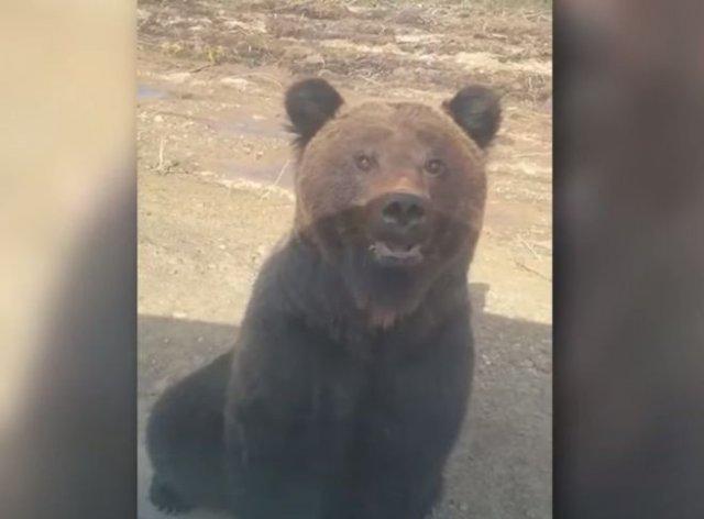 Встреча с медведем на дороге