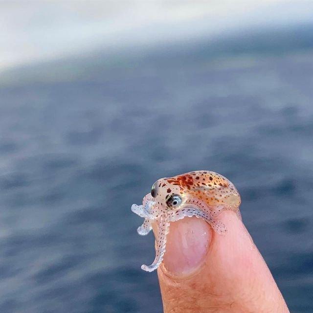 Большой и страшный осьминог