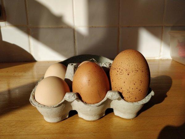 Порой курочки несут огромные яйца