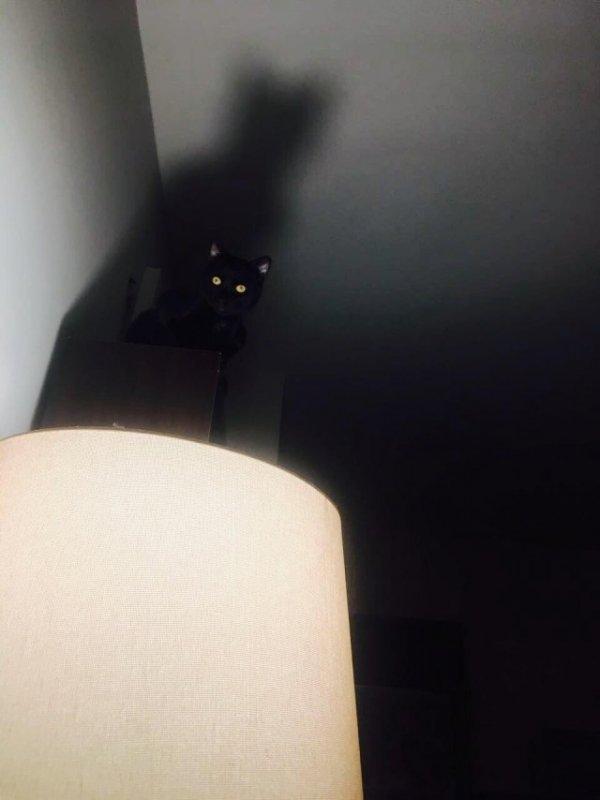 Я уже не кот... я бэтман