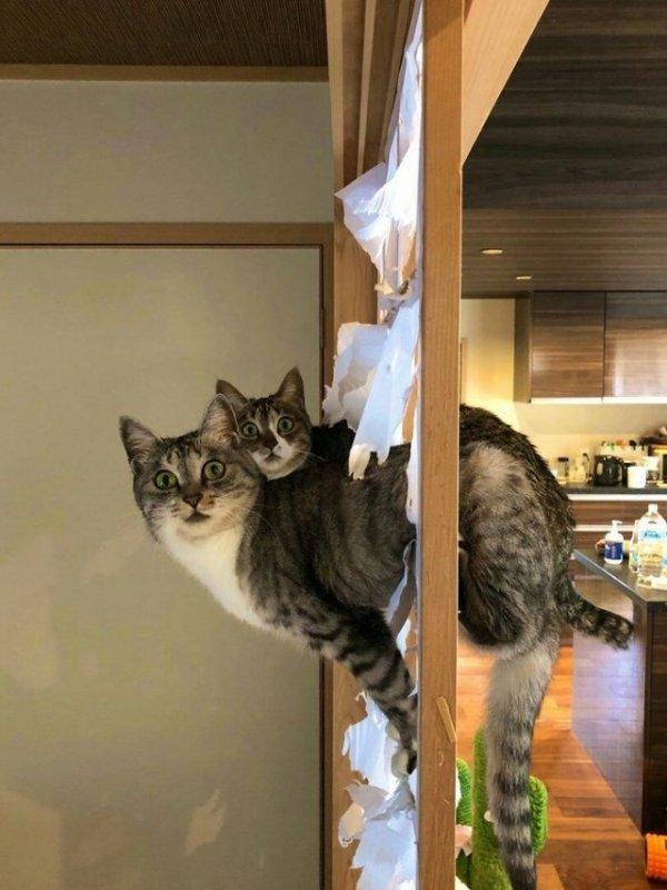 Если один кот - это беда, то два... это КОТОстрофа