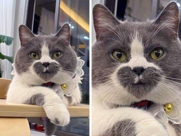 Если бы у Святого Валентина был кот, то он выглядел бы вот так