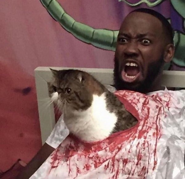 Котик-чужой