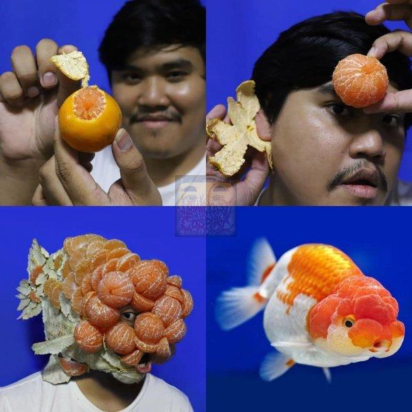 Рыба из мандаринок