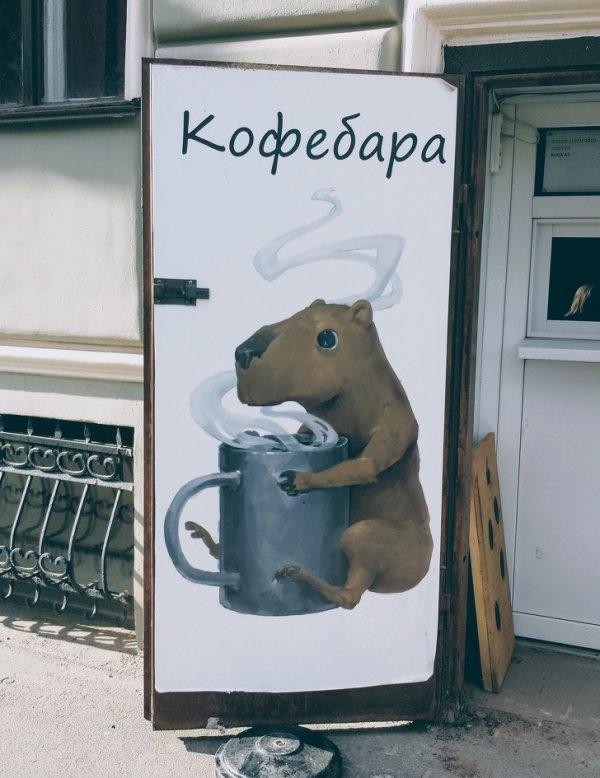 Капибаре точно по душе этот кофе