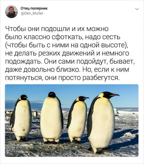 Подборка интересных твитов о жизни в Антарктиде