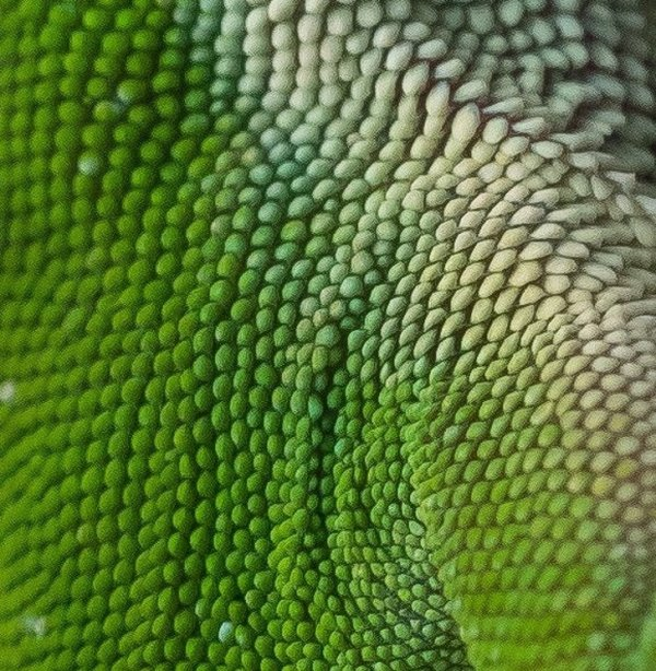 Макрофотография кожи ящерицы