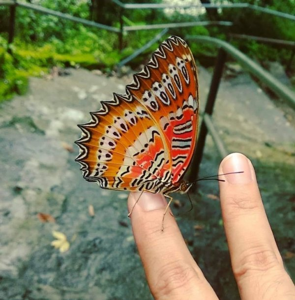 Угадайте любимый ужастик это бабочки