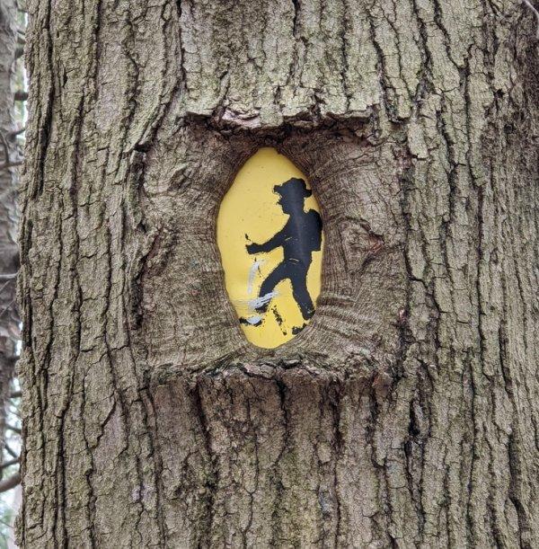 """А это дерево решили """"отобедать"""" дорожным знаком"""