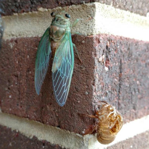 Это неоновая цикада