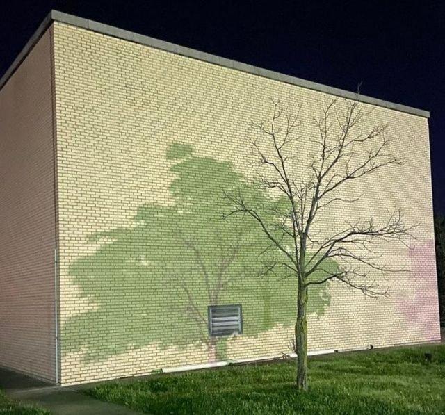 Это тень от двух разных деревьев на моей парковке