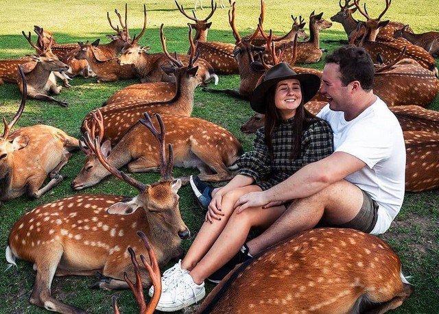 В японском городе Нара люди боятся коронавируса, а вот олени - нет