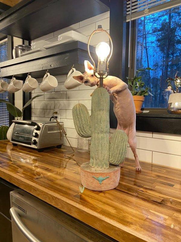 Лампа-кактус