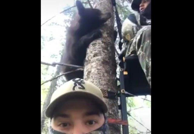 Медведь залез прямо на дерево и напугал мужчин