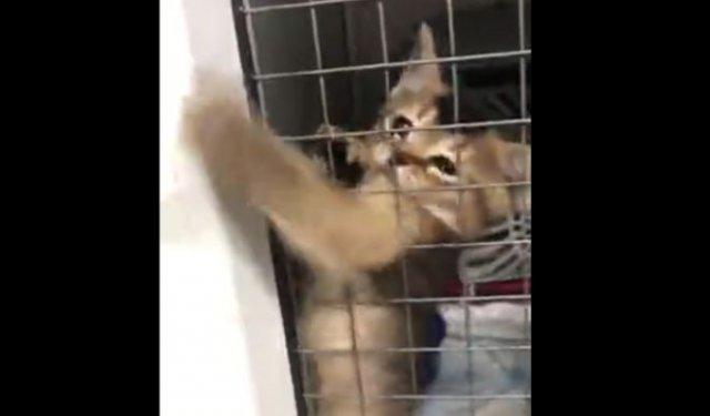 Котенок, который хочет выбраться из клетки и всем отомстить