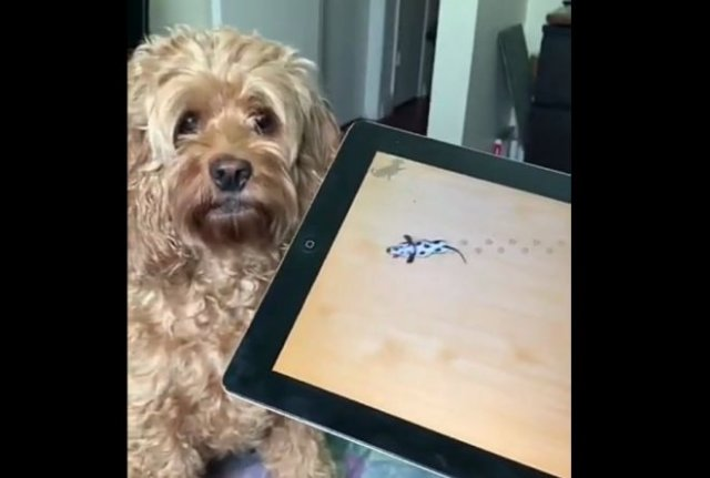 Обманули собаку
