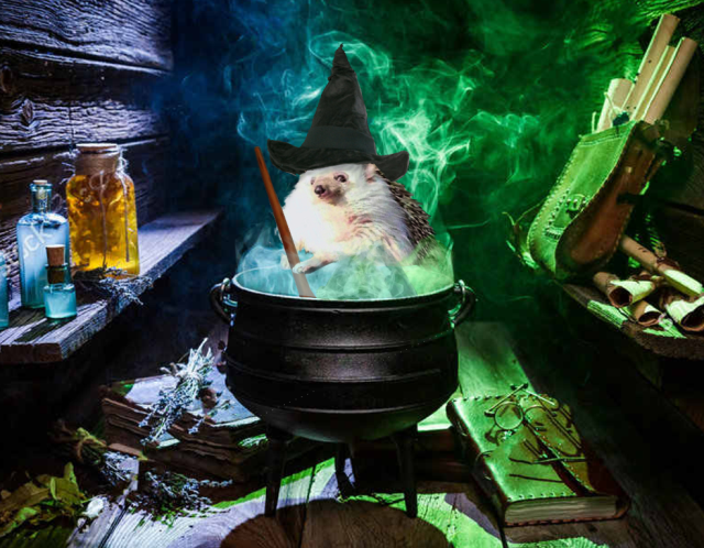 Маленькая колючая ведьма