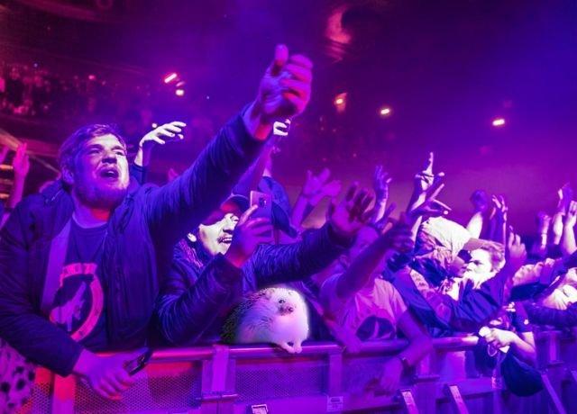 Ежик в фан-зоне на концерте любимой группы