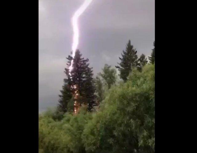 Очень эмоциональный оператор, увидевший, как молния снесла дерево
